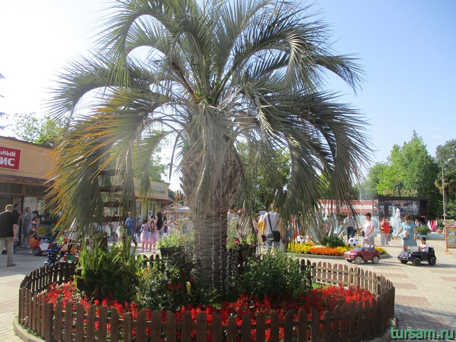 Адлерский парк культуры и отдыха-9