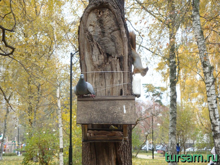 Белка и голубь в Чапаевском парке