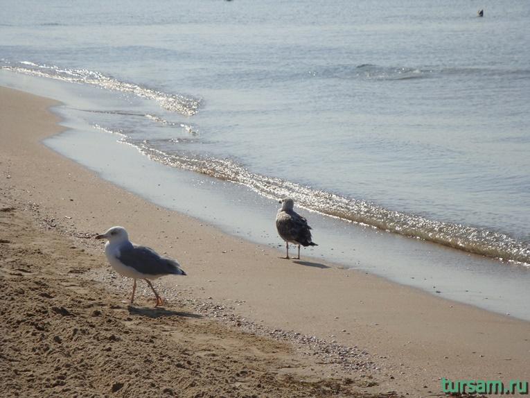 Чайки на пляже-2