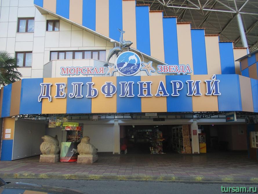 Дельфинарий Морская Звезда в Лазаревском-1