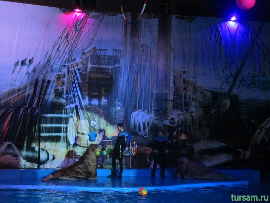 Дельфинарий Морская Звезда в Лазаревском-3