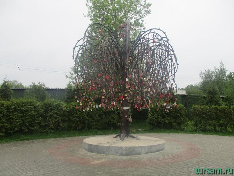 Дерево любви на территории парка культуры и отдыха в Мытищах