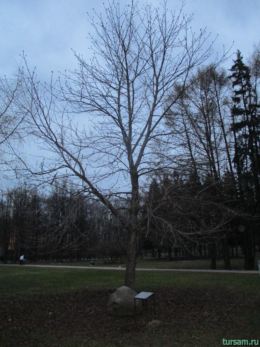 Дерево Мира в парке Дружбы