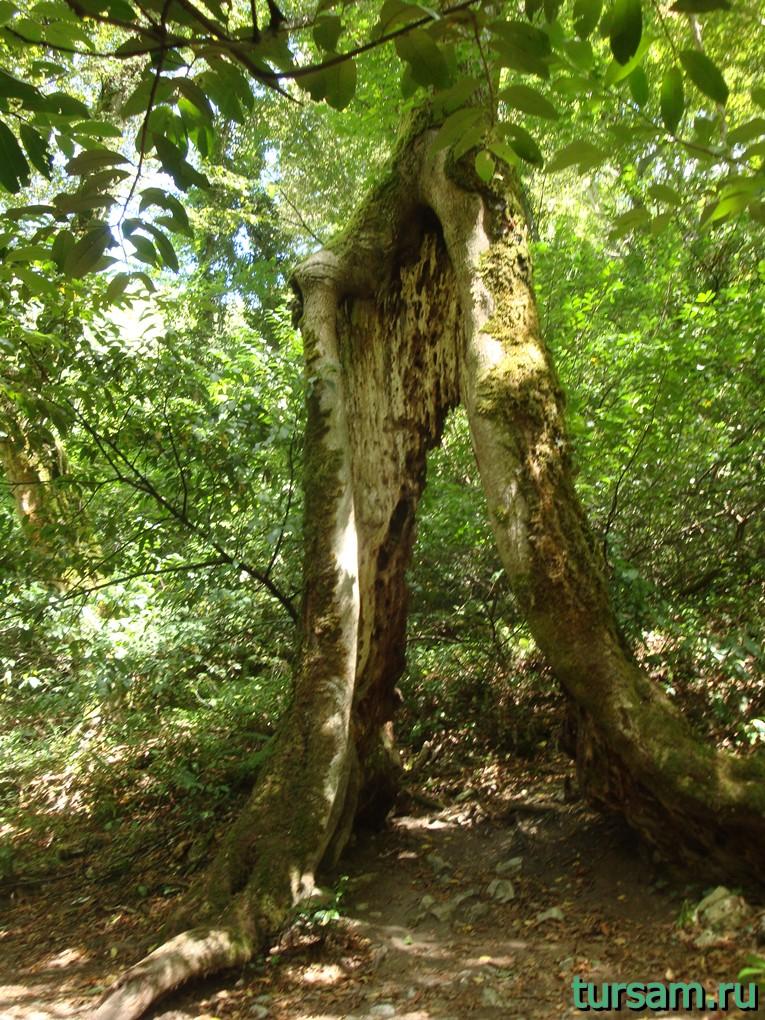 Дерево желаний на маршруте Агурское ущелье и водопады