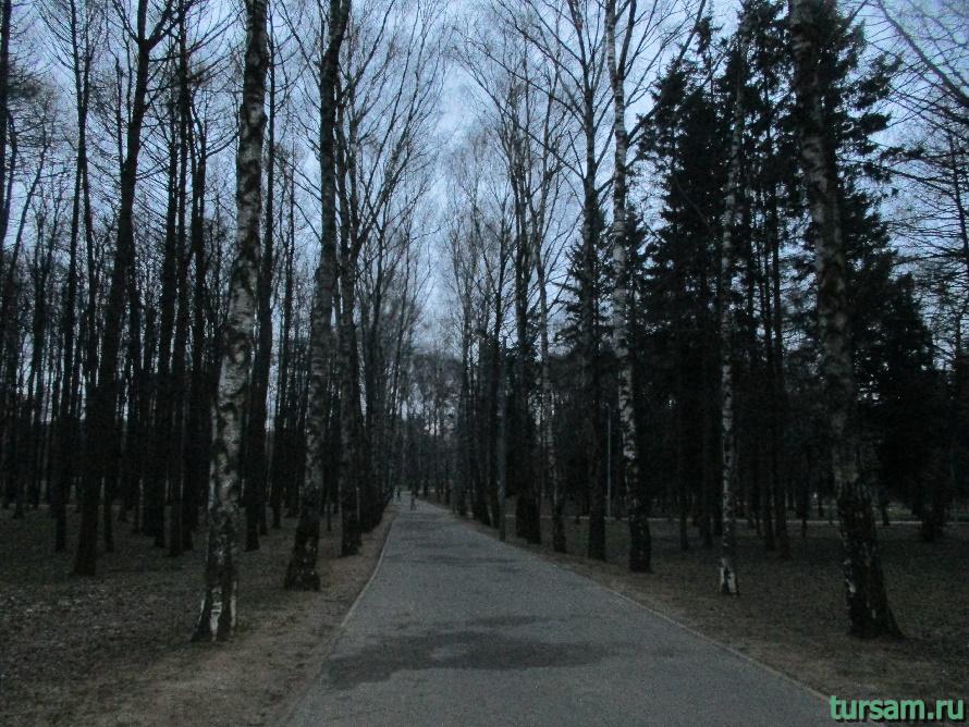 Деревья в парке Дружбы-2