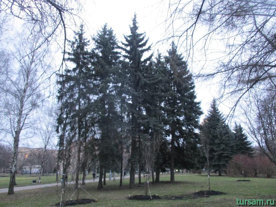 Деревья в парке Дружбы