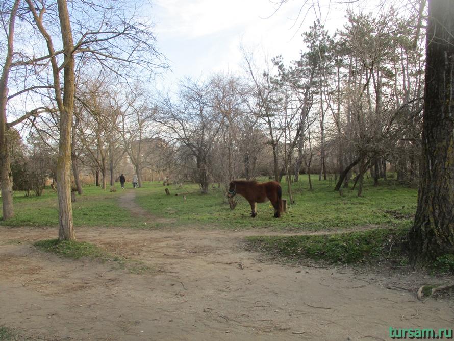 Детский парк Джунгли в Анапе-16