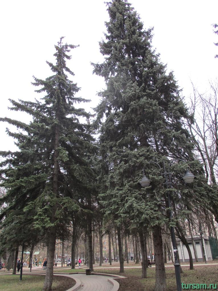 eli-v-parke-imeni-vorovskogo