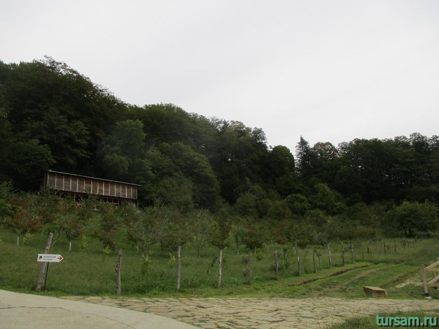 Ферма Экзархо в Сочи-8