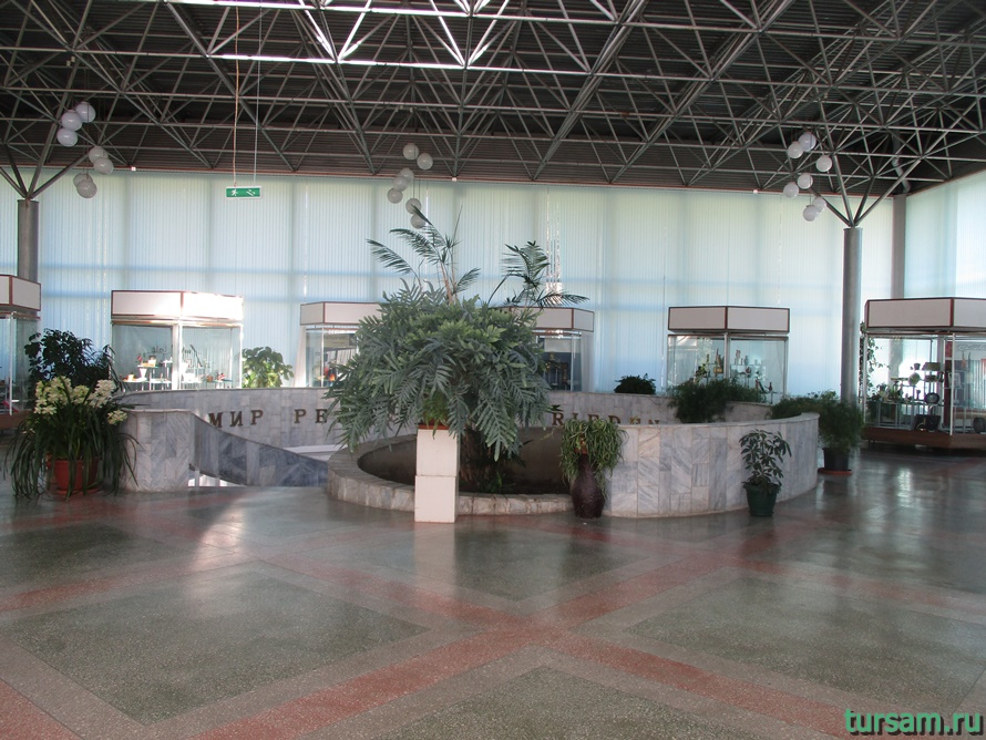Фото музея Дерево Дружбы в Сочи-2