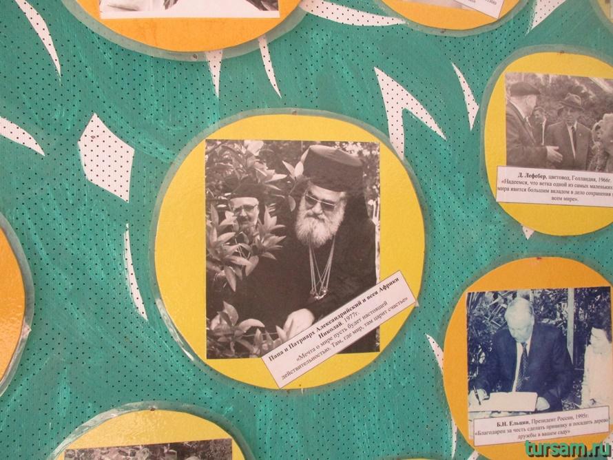 Фото музея Дерево Дружбы в Сочи-20
