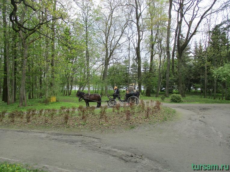 Фото на территории одного из ландшафтных парков рядом с Несвижским замком-19