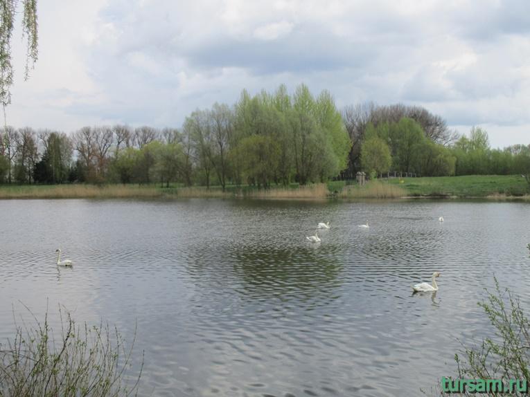 Фото на территории одного из ландшафтных парков рядом с Несвижским замком