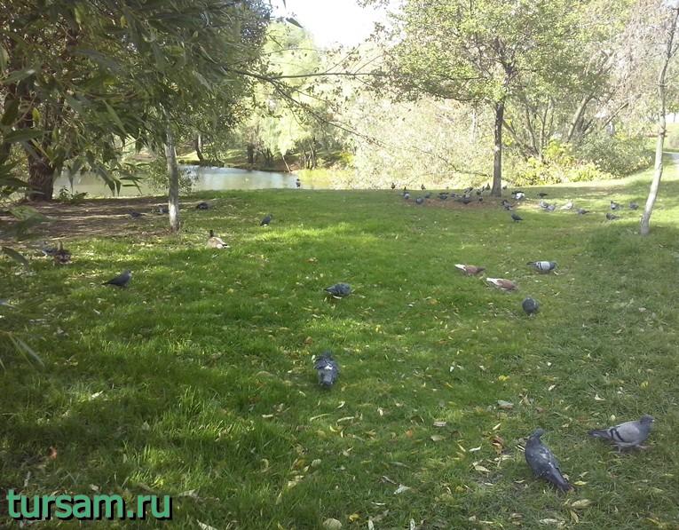 Голуби в парке рядом с метро Борисово