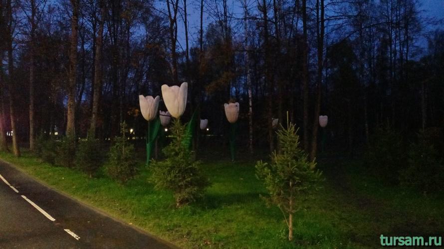 Городской парк культуры и отдыха в Ивантеевке-10
