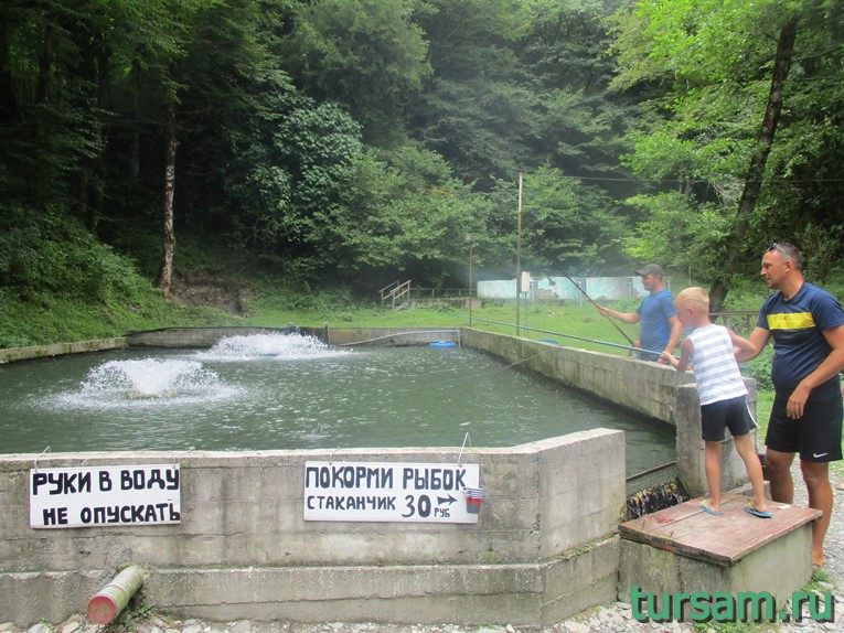 Искусственный водоем с фонтанами и плавающей форелью