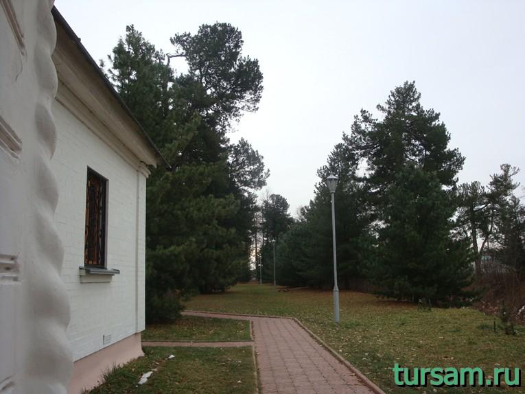 Кедровник на территории Свято-Введенского Толгского женского монастыря