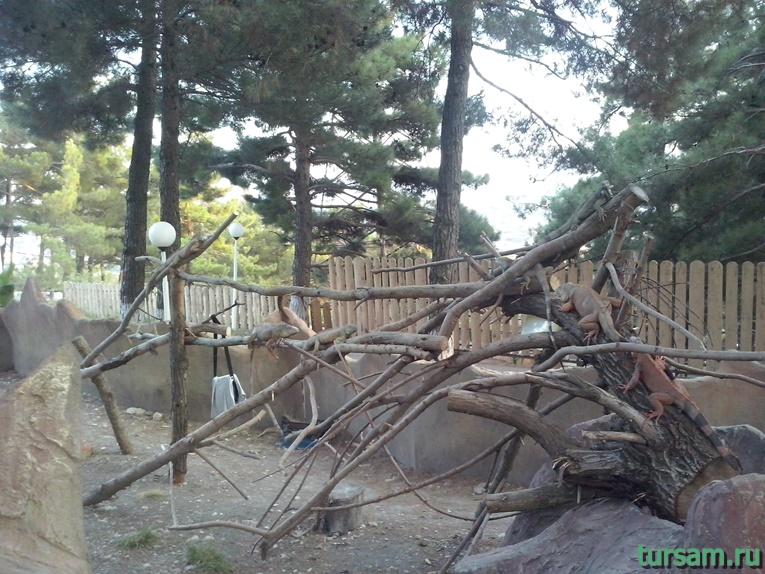 """Контактный зоопарк в парке развлечений """"Олимп"""" в Геленджике фото № 10"""