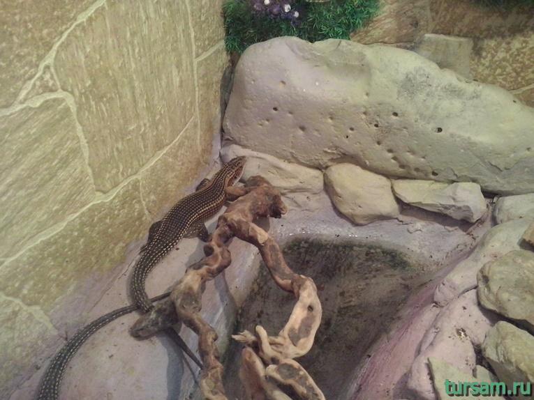 """Контактный зоопарк в парке развлечений """"Олимп"""" в Геленджике фото № 12"""