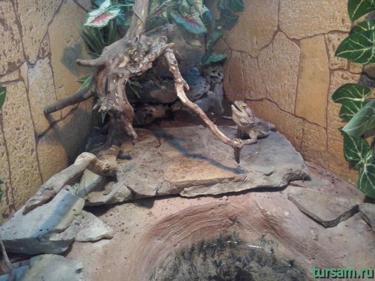 """Контактный зоопарк в парке развлечений """"Олимп"""" в Геленджике фото № 14"""