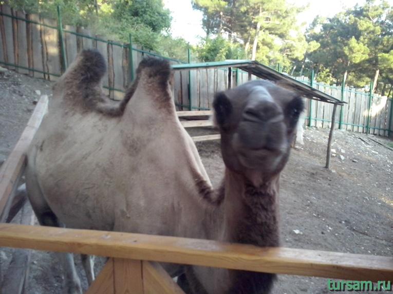 """Контактный зоопарк в парке развлечений """"Олимп"""" в Геленджике фото № 2"""