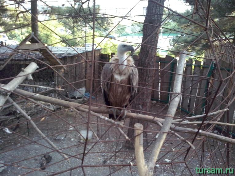 """Контактный зоопарк в парке развлечений """"Олимп"""" в Геленджике фото № 4"""