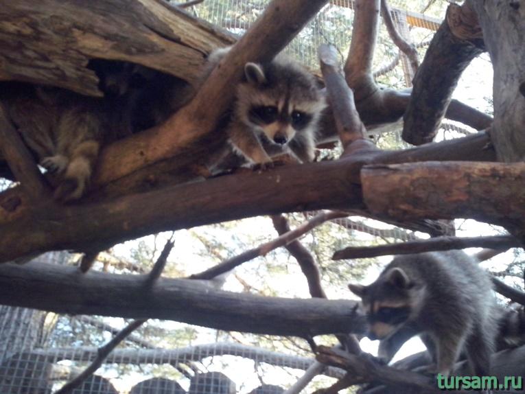 """Контактный зоопарк в парке развлечений """"Олимп"""" в Геленджике фото № 5"""
