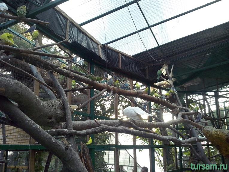 """Контактный зоопарк в парке развлечений """"Олимп"""" в Геленджике фото № 8"""