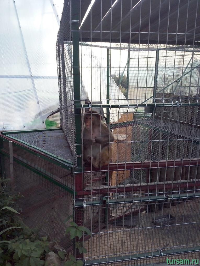 """Контактный зоопарк в парке развлечений """"Олимп"""" в Геленджике фото № 9"""