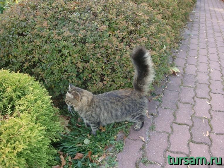 """Кошка, изучающая растения малого розария в парке """"Сокольники"""""""