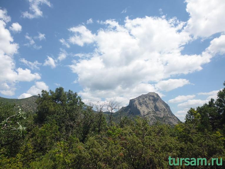 Множество деревьев на фоне горы на территории Ботанического заказника - Новый Свет