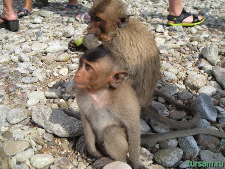 Фото обезьян на острове №2