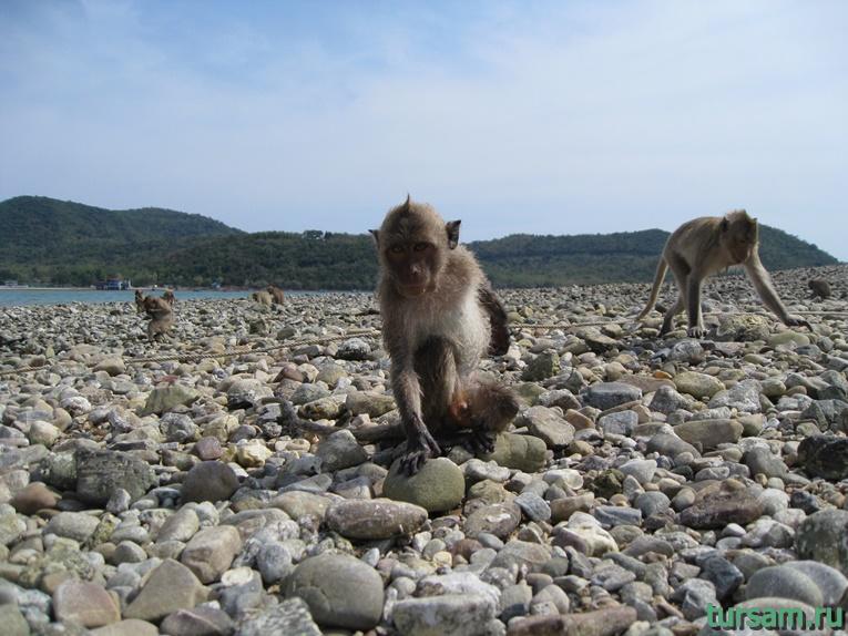 Фото обезьян на острове №3