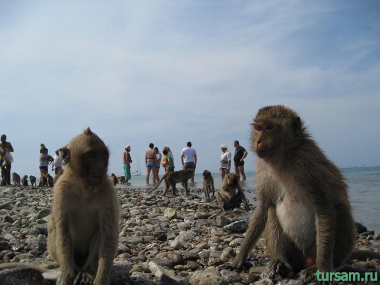 Фото обезьян на острове №4