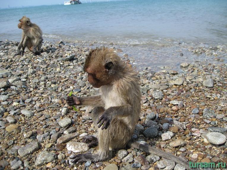 Фото обезьян на острове