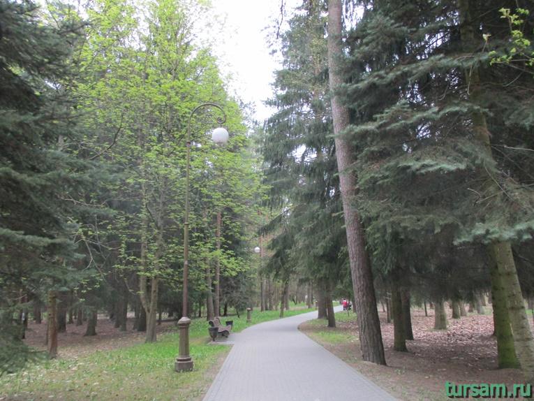 Одна из аллей в парке имени Челюскинцев