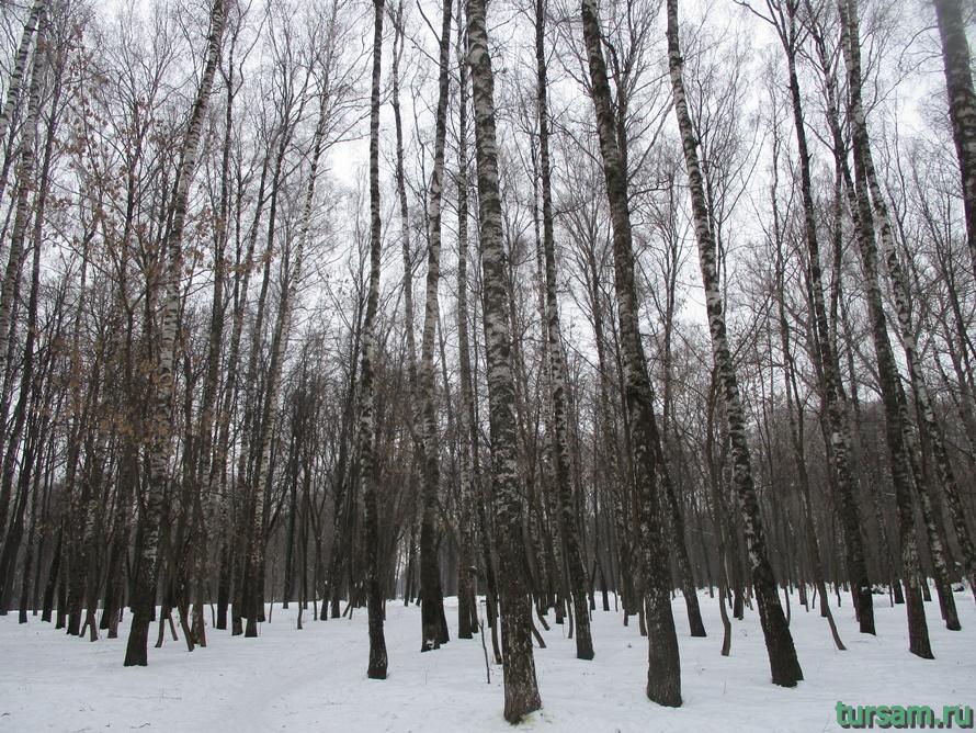 Парк Белоусова в Туле-1