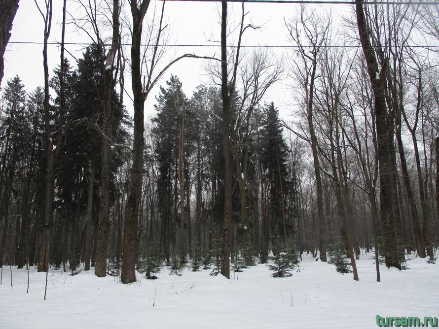 Парк Белоусова в Туле-5