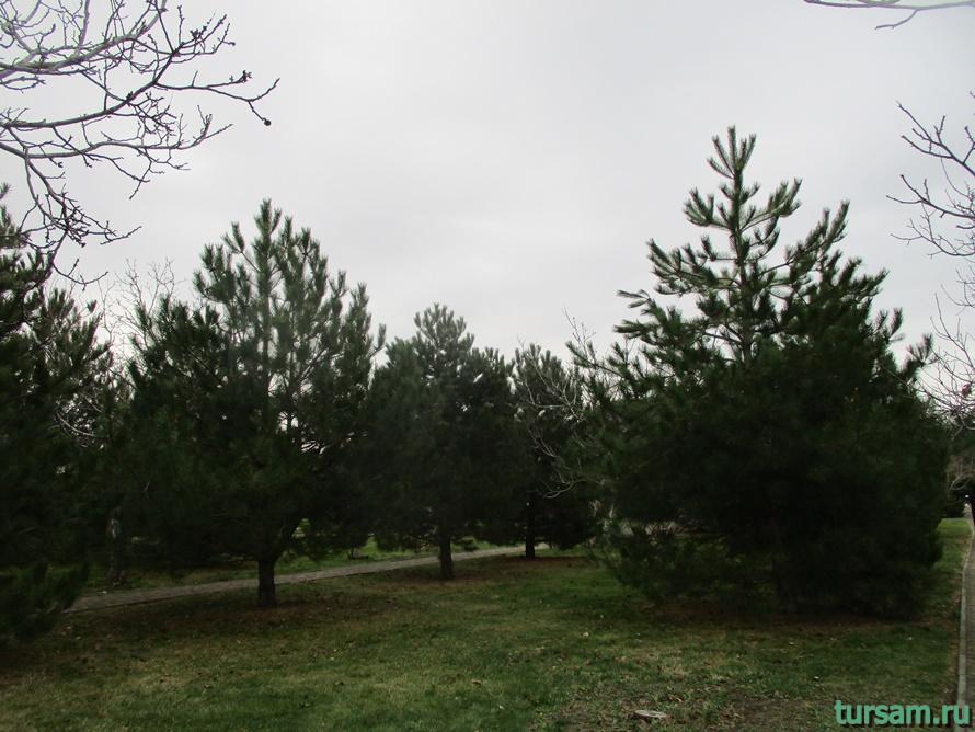 Парк Ореховая роща в Анапе-2