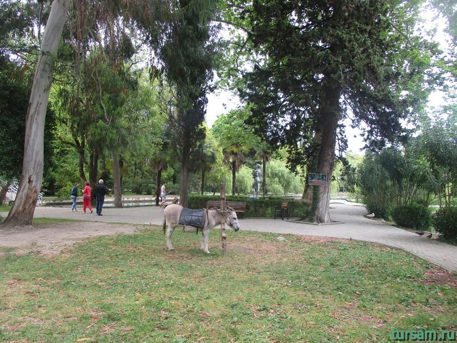 Приморский парк в Новом Афоне в Абхазии-17