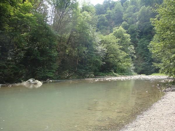 Река Хоста в тисо-самшитовой роще