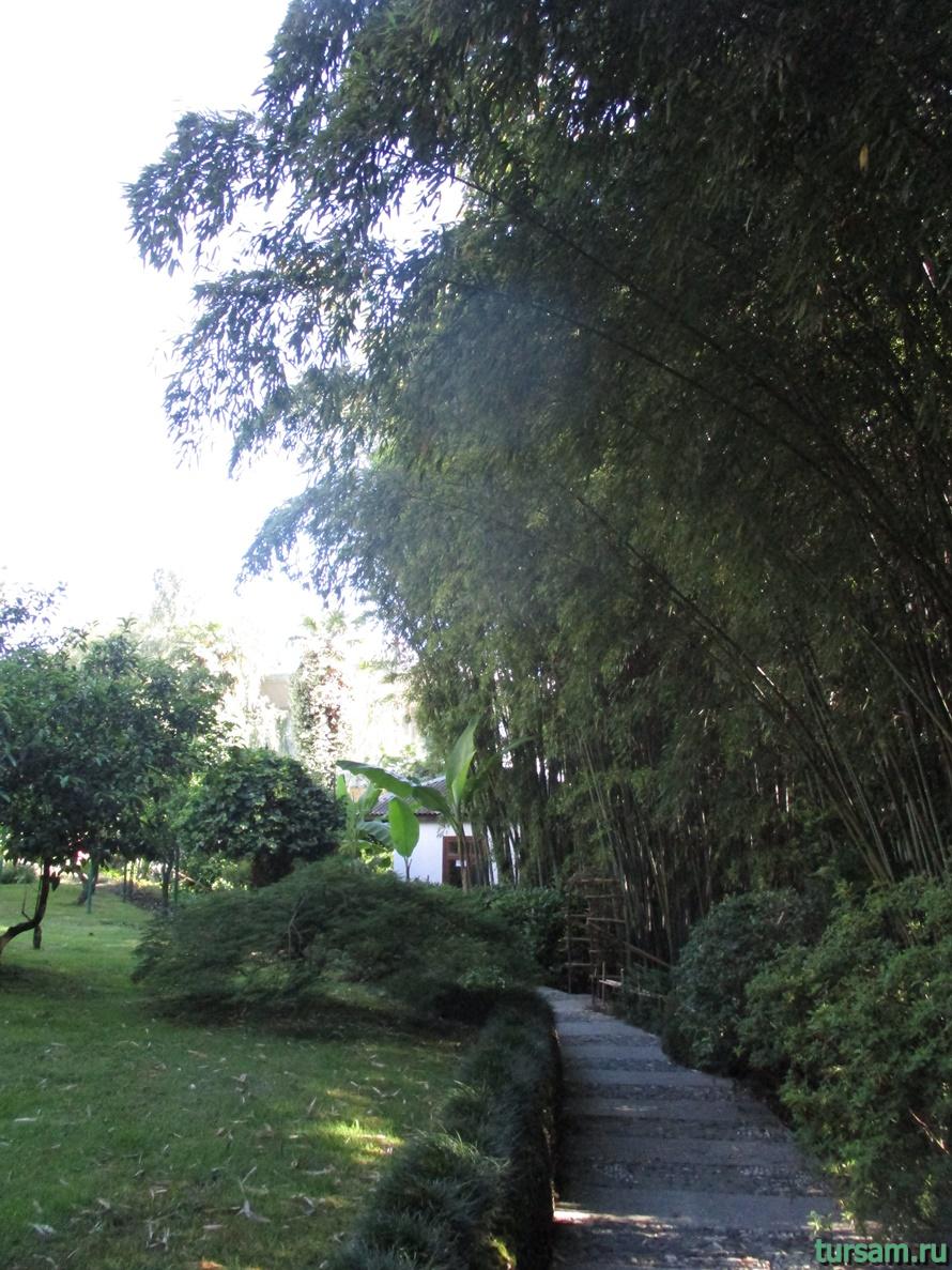 Сад-музей Дерево Дружбы в Сочи-2