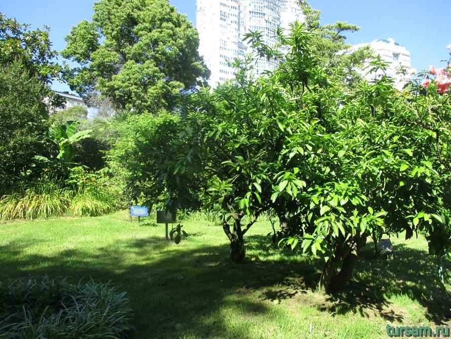 Сад-музей Дерево Дружбы в Сочи-4