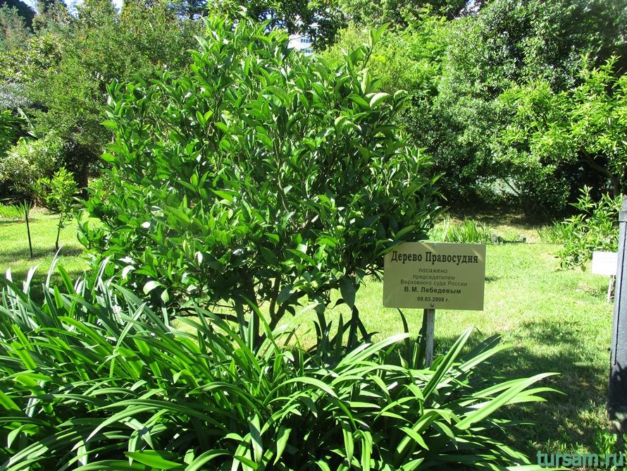 Сад-музей Дерево Дружбы в Сочи-5