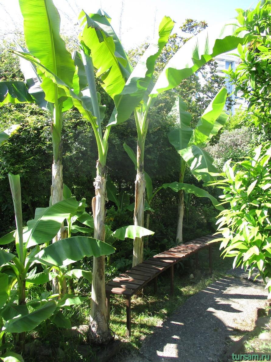 Сад-музей Дерево Дружбы в Сочи-6