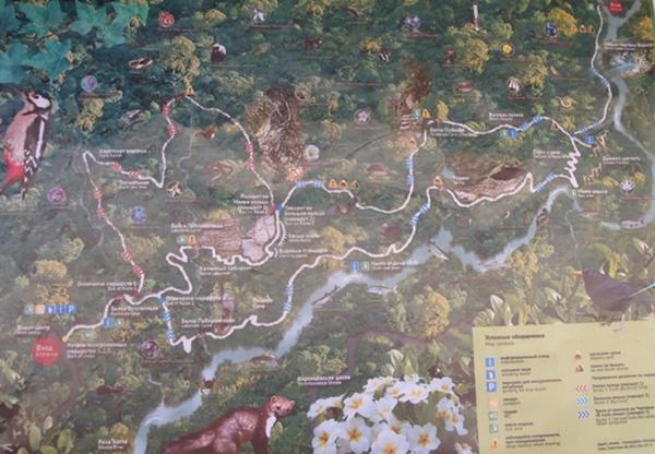 схема маршрутов в тисо-самшитовой роще