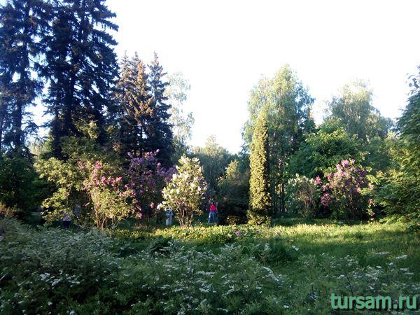 Сиреневый сад на территории парка Сокольники-4