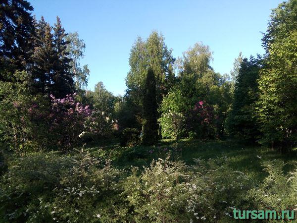 Сиреневый сад на территории парка Сокольники