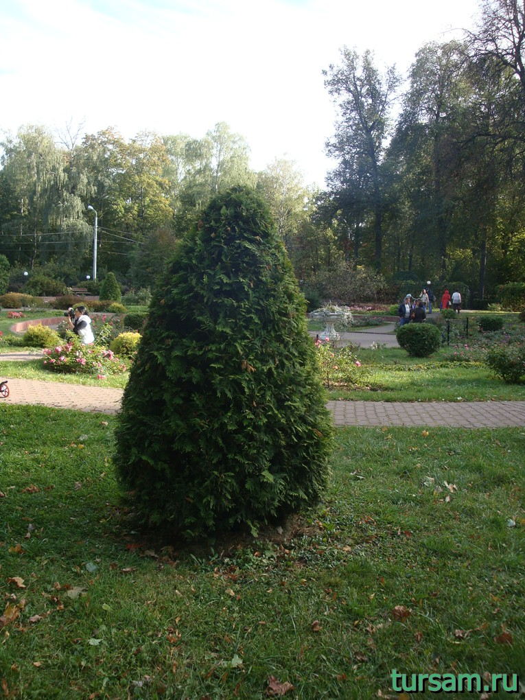 """Туя в малом розарии в парке """"Сокольники"""""""