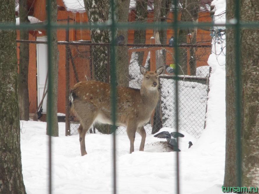 Зооуголок в парке Белоусова-1